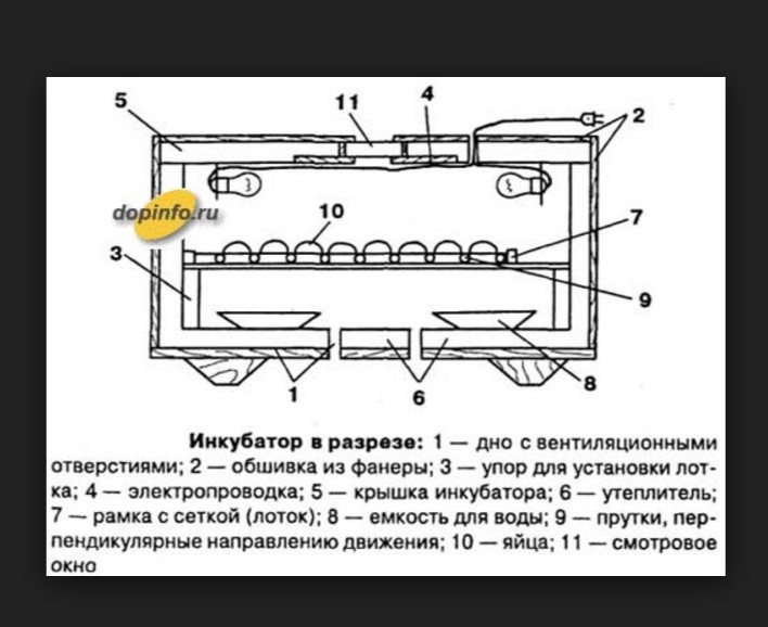 Инкубатор своими руками чертежи с размерами из пенопласта